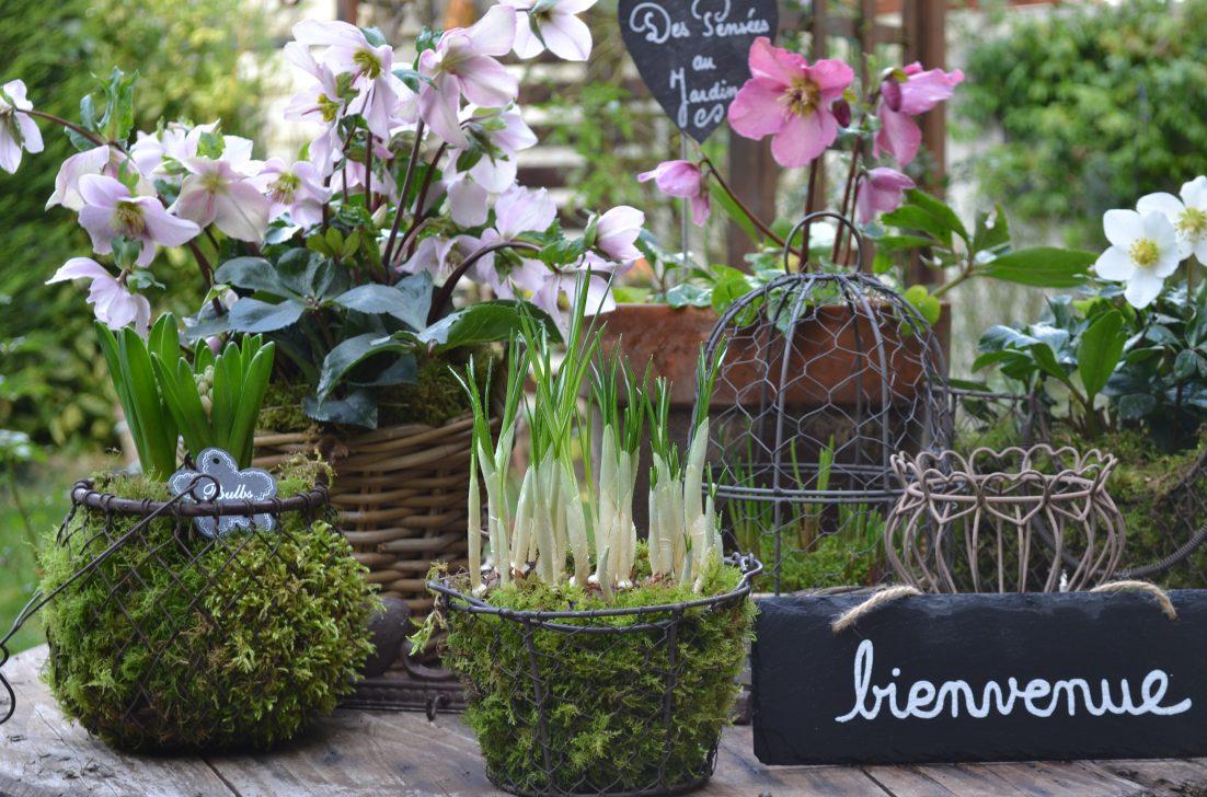 Jardiner Malin Et Preparer Aujourd Hui La Pelouse De Demain Des