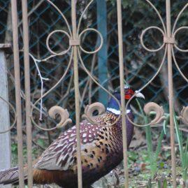 comment faire de son jardin un vrai petit paradis pour les oiseaux des pens es au jardin. Black Bedroom Furniture Sets. Home Design Ideas