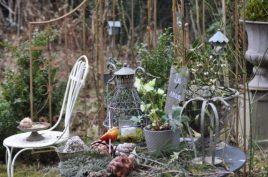paradis des oiseaux