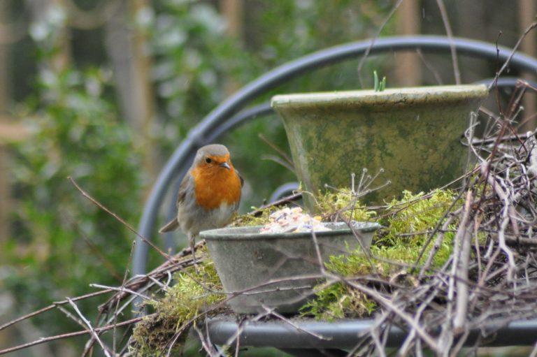 Comment faire de son jardin un vrai petit paradis pour les - Faire fuir les oiseaux dans un jardin ...