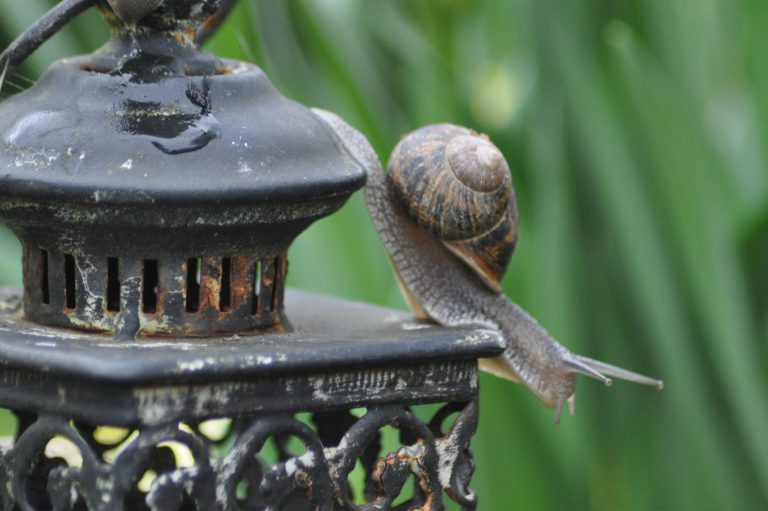 lanterne à l'escargot