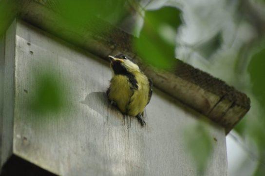 première sortie du nid