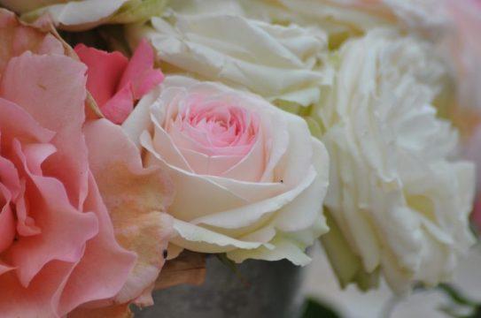 belles roses