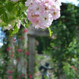 Les allées de la Roseraie du Val de Marne jusqu'au bassin de Cupidon
