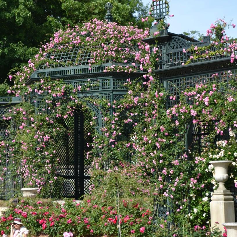 Dôme couvert de roses Alexandre Girault
