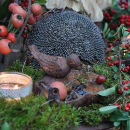 graines et décoration