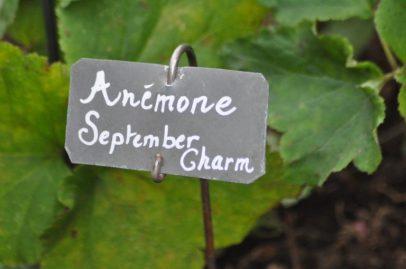 Pancarte Anemone