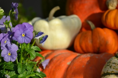 décoration d'automne au jardin