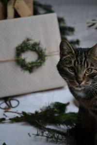le chat , mon meilleur apprenti Père Noël
