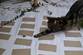 apprenti chat