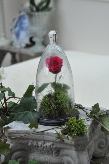 rose de la belle et la bête