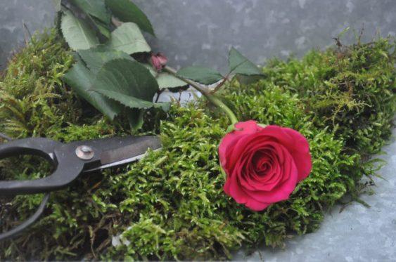 rose coupée et mousse