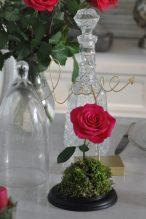 rose et mousse