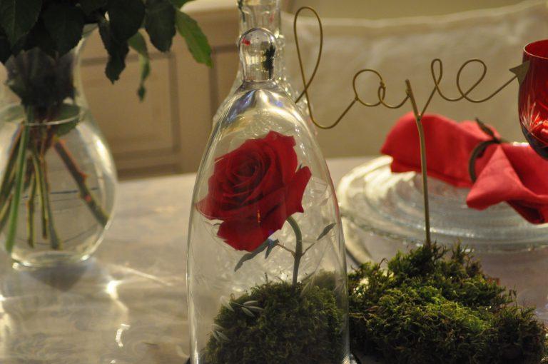 rose protégée
