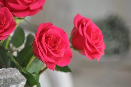 rose loves