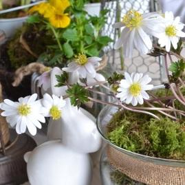 anemone-et-lapin