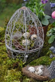 oeuf et nid