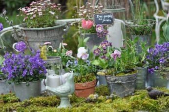 jardin de pots