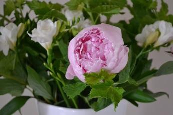 pivoine-bouquet-en-vase