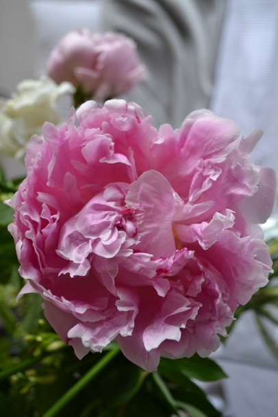 pivoine-bouquet-focus