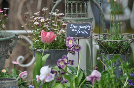 le printemps dans le jardin des pensées