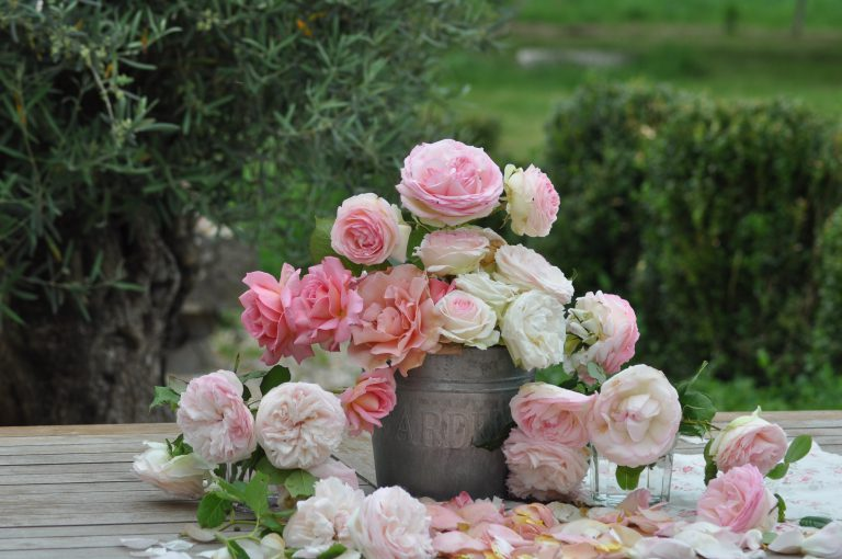 bouquet de roses et olivier