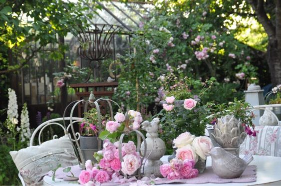 jardin-roses