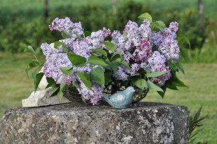 Panier de lilas