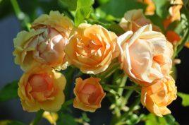 Bouquet de Polka