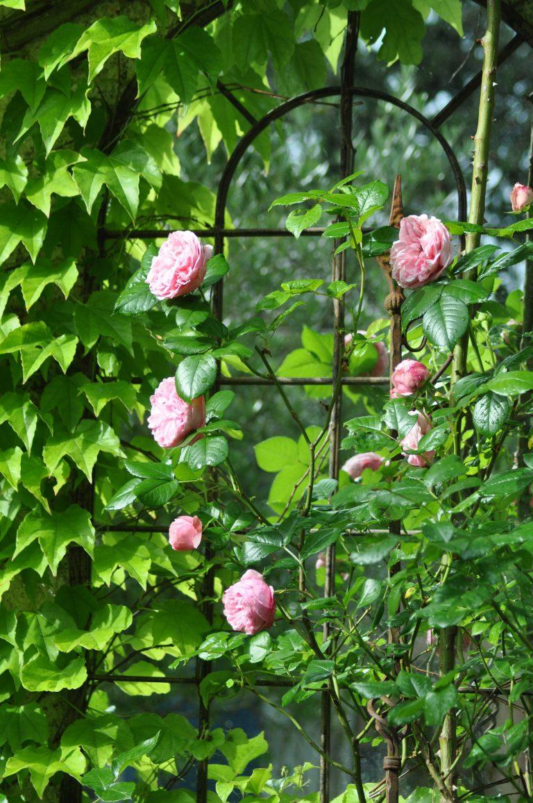 miroir et roses