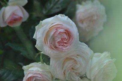 Rossard pastel