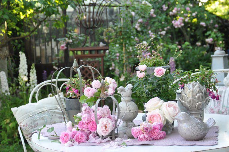 splendide petit paradis de roses