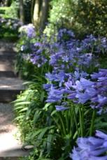 agapanthe-bordant-escaliers-etretat
