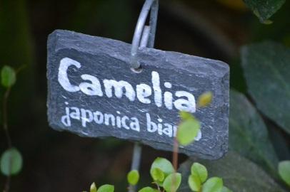 etiquette-camelia