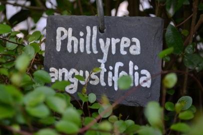etiquette-phillyrea