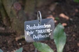 etiquette-rhododendron