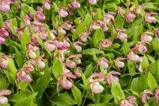 jardin-des-orchidees