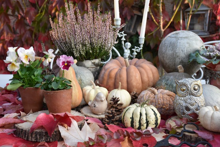 automne potirons et chouette