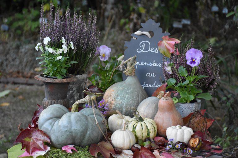des pensées au jardin en automne