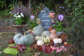 des pensées au jardin harmonies automnales