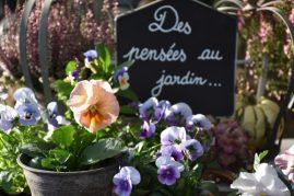 Des pensées au jardin