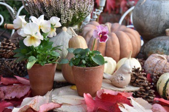 Pensées, potirons et feuilles d'automne