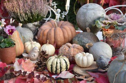 Zoom potées automne