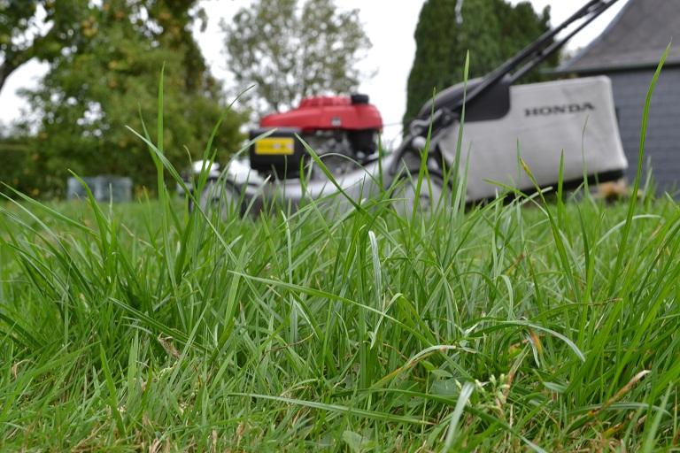 herbes folles avant tonte