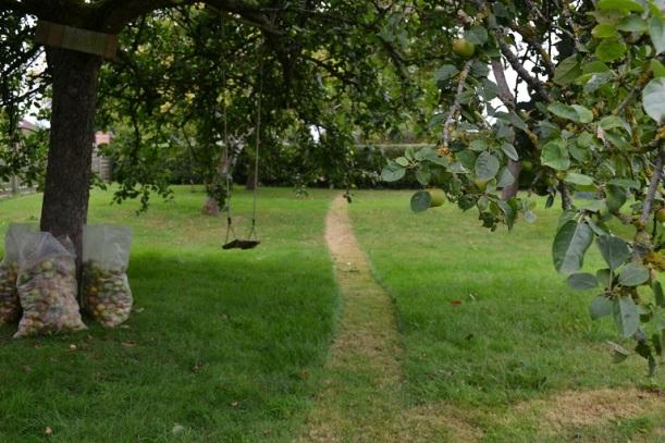 le chemin dans la pelouse
