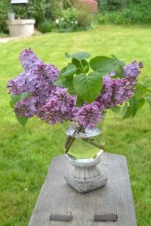 bouquet de lilas sur pelouse