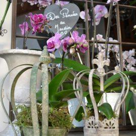 orchidee (5)