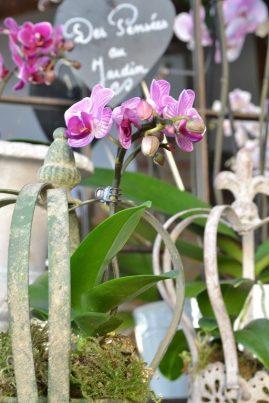 orchidee (7)