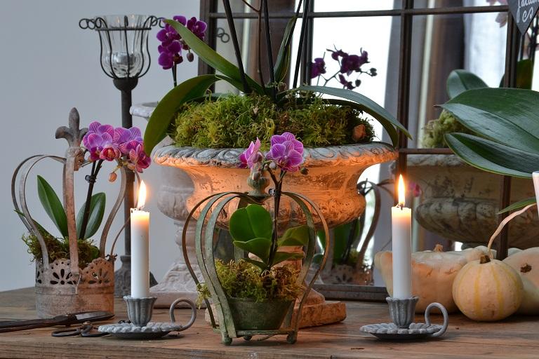 des orchidées lumineuses