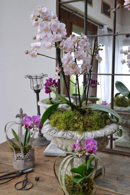 orchids (47)